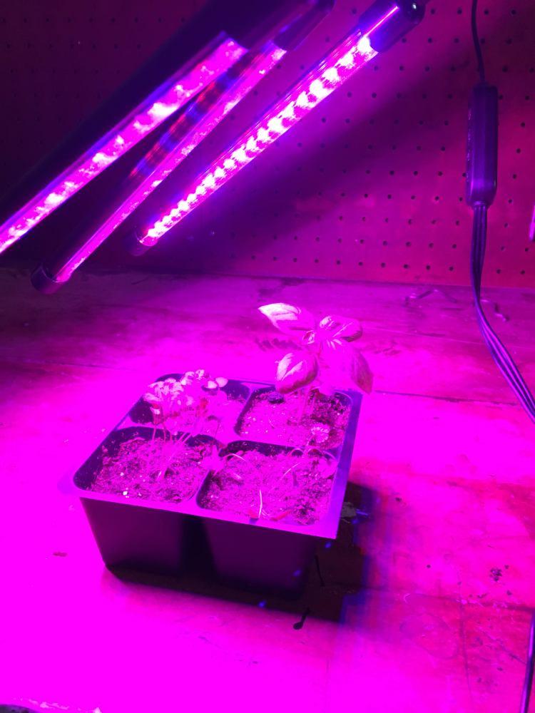 Grow lights above seedling.