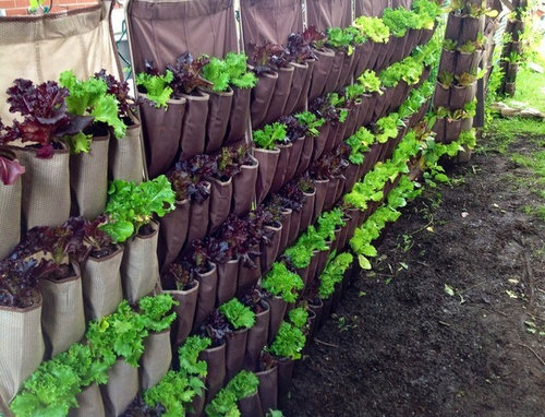 Vertical pouches with plants growing out of each one.