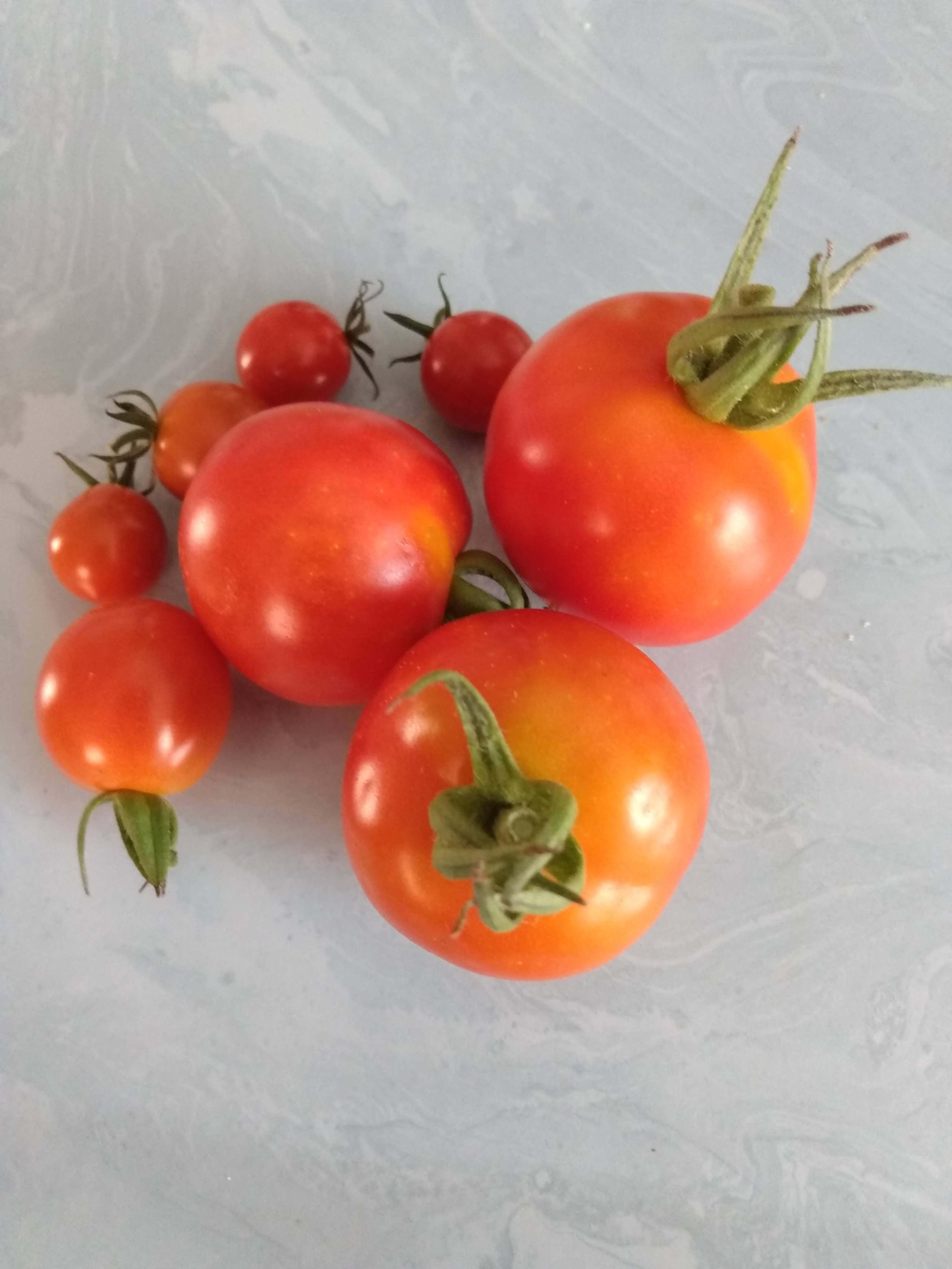Pile of small ripe tomatoes